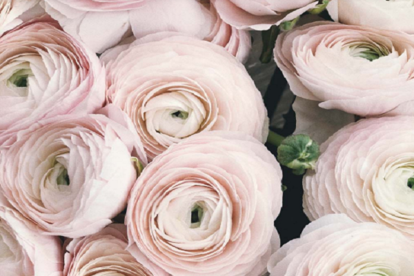 Case Study: Is It All Rosy?